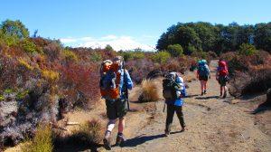 Waihohonu Hut walk,  helenblairsart