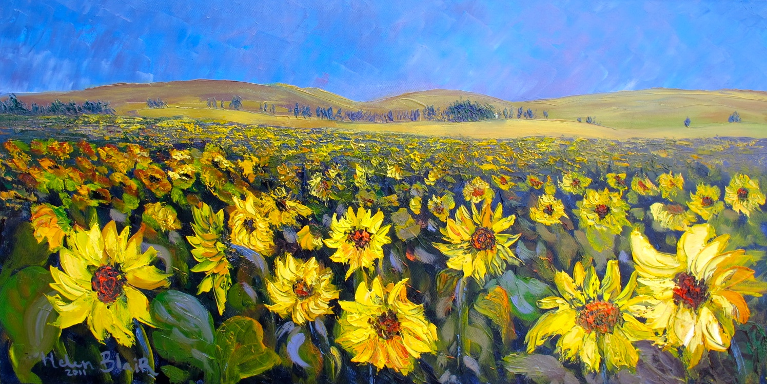 Sunflowers, helenblairsart