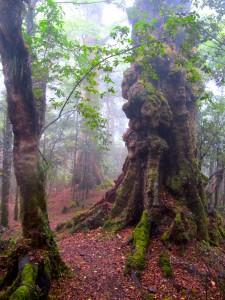 Fog Mist in the trees
